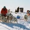 Groenland_125_Musher_trennt_kaempfende_Hunde