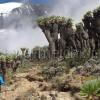 Kilimanjaro_16